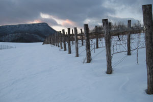 Vines in Snow